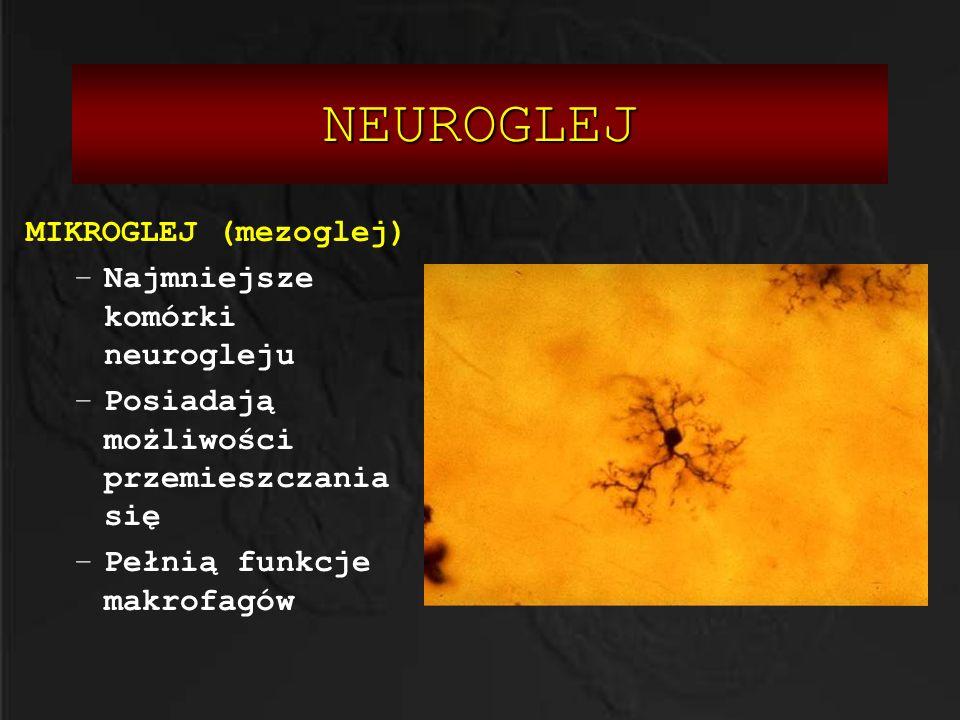 NEUROGLEJ MIKROGLEJ (mezoglej) –Najmniejsze komórki neurogleju –Posiadają możliwości przemieszczania się –Pełnią funkcje makrofagów