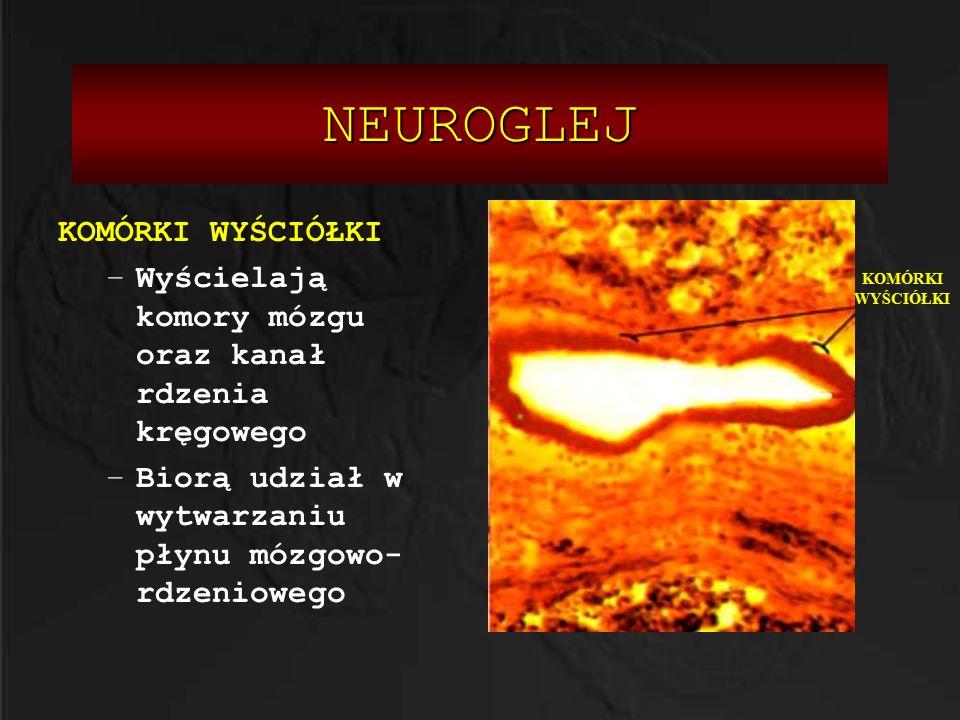 SYNAPSA Rolą synapsy jest przekazywanie sygnałów: a)Drogą chemiczną z wykorzystaniem substancji chemicznych(neurotransmiterów =neurorzekaźników) b)Drogą elektryczną