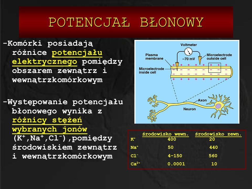 POTENCJAŁ BŁONOWY -Komórki posiadają różnice potencjału elektrycznego pomiędzy obszarem zewnątrz i wewnątrzkomórkowym -Występowanie potencjału błonowe