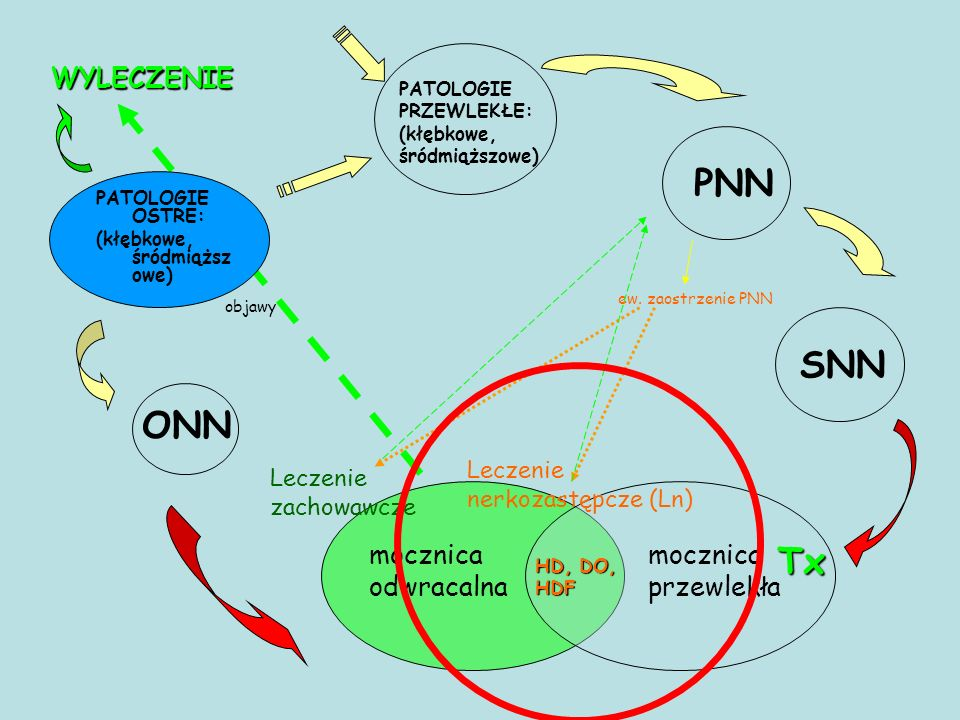 WYLECZENIE PATOLOGIE PRZEWLEKŁE: (kłębkowe, śródmiąższowe) PNN SNN ONN Leczenie nerkozastępcze (Ln) HD, DO, HDF Tx mocznica odwracalna mocznica przewlekła objawy PATOLOGIE OSTRE: (kłębkowe, śródmiąższ owe) Leczenie zachowawcze ew.