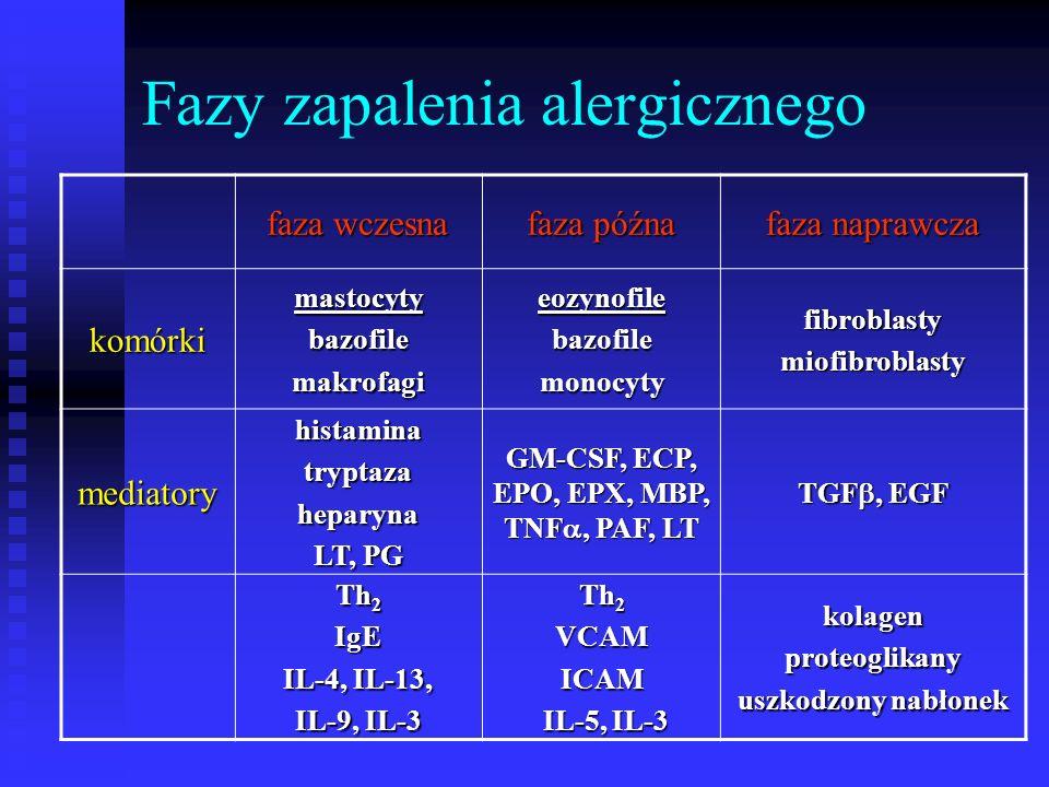 Fazy zapalenia alergicznego faza wczesna faza późna faza naprawcza komórkimastocytybazofilemakrofagieozynofilebazofilemonocytyfibroblastymiofibroblasty mediatoryhistaminatryptazaheparyna LT, PG GM-CSF, ECP, EPO, EPX, MBP, TNF , PAF, LT TGF , EGF Th 2 IgE IL-4, IL-13, IL-9, IL-3 Th 2 VCAMICAM IL-5, IL-3 IL-5, IL-3kolagenproteoglikany uszkodzony nabłonek