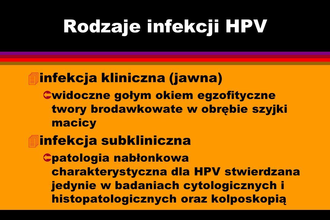 Rodzaje infekcji HPV 4infekcja kliniczna (jawna) Ûwidoczne gołym okiem egzofityczne twory brodawkowate w obrębie szyjki macicy 4infekcja subkliniczna