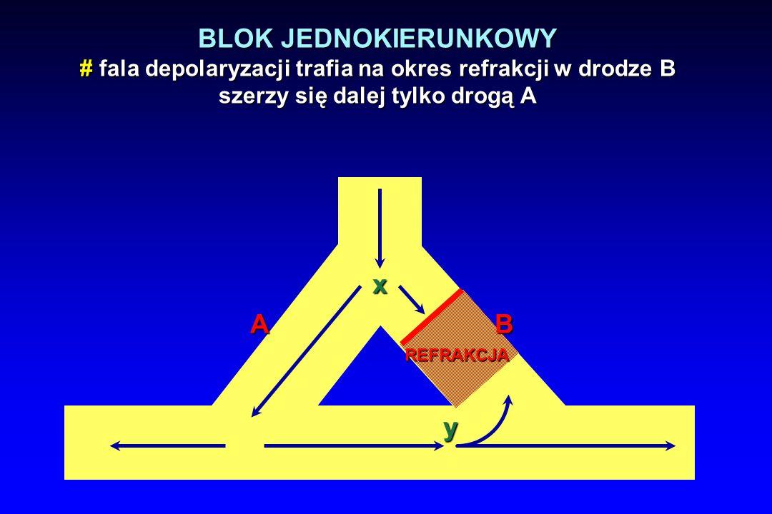 x A y BLOK JEDNOKIERUNKOWY # fala depolaryzacji trafia na okres refrakcji w drodze B szerzy się dalej tylko drogą A REFRAKCJA B