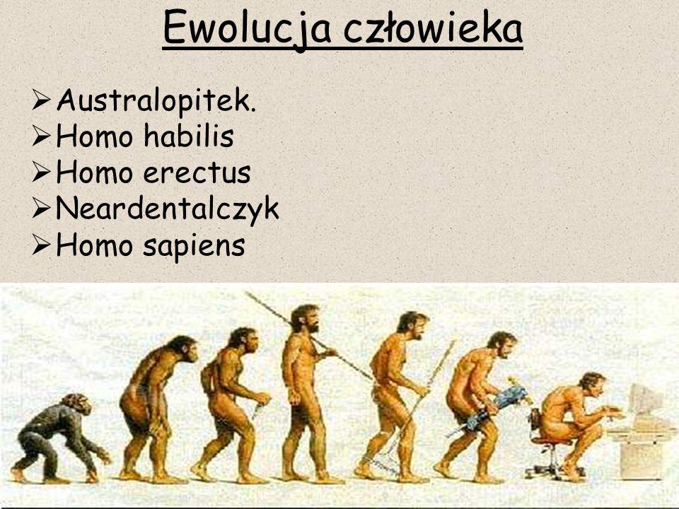  Australopitek.  Homo habilis  Homo erectus  Neardentalczyk  Homo sapiens