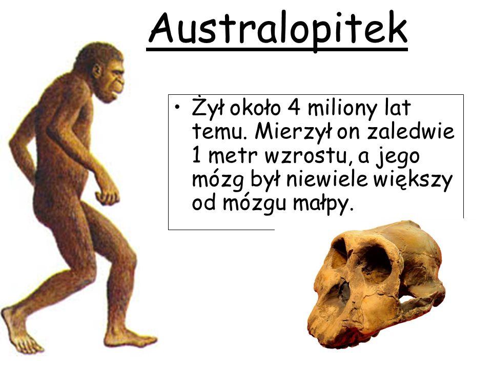 Żył około 4 miliony lat temu. Mierzył on zaledwie 1 metr wzrostu, a jego mózg był niewiele większy od mózgu małpy. Australopitek