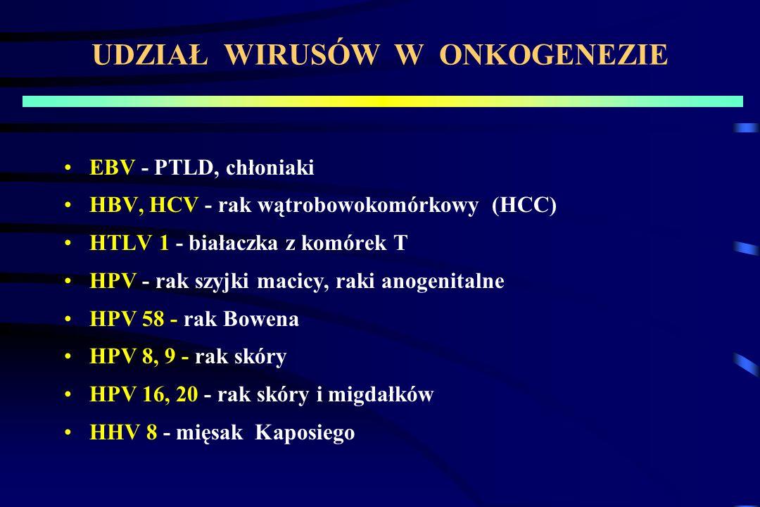 UDZIAŁ WIRUSÓW W ONKOGENEZIE EBV - PTLD, chłoniaki HBV, HCV - rak wątrobowokomórkowy (HCC) HTLV 1 - białaczka z komórek T HPV - rak szyjki macicy, raki anogenitalne HPV 58 - rak Bowena HPV 8, 9 - rak skóry HPV 16, 20 - rak skóry i migdałków HHV 8 - mięsak Kaposiego