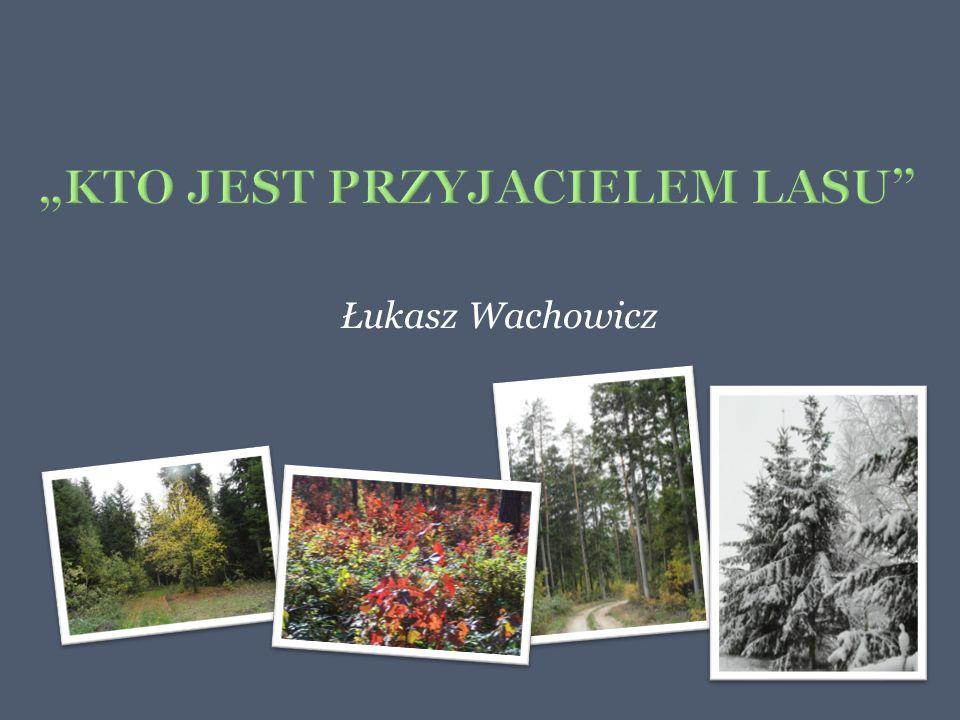 Łukasz Wachowicz