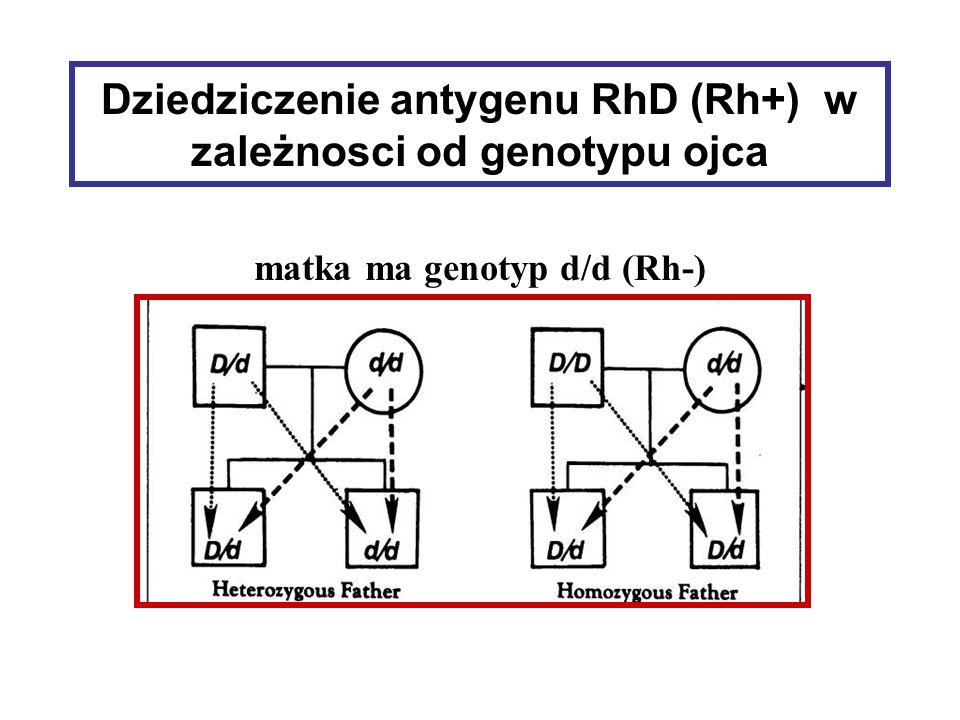 Dziedziczenie antygenu RhD (Rh+) w zależnosci od genotypu ojca matka ma genotyp d/d (Rh-)