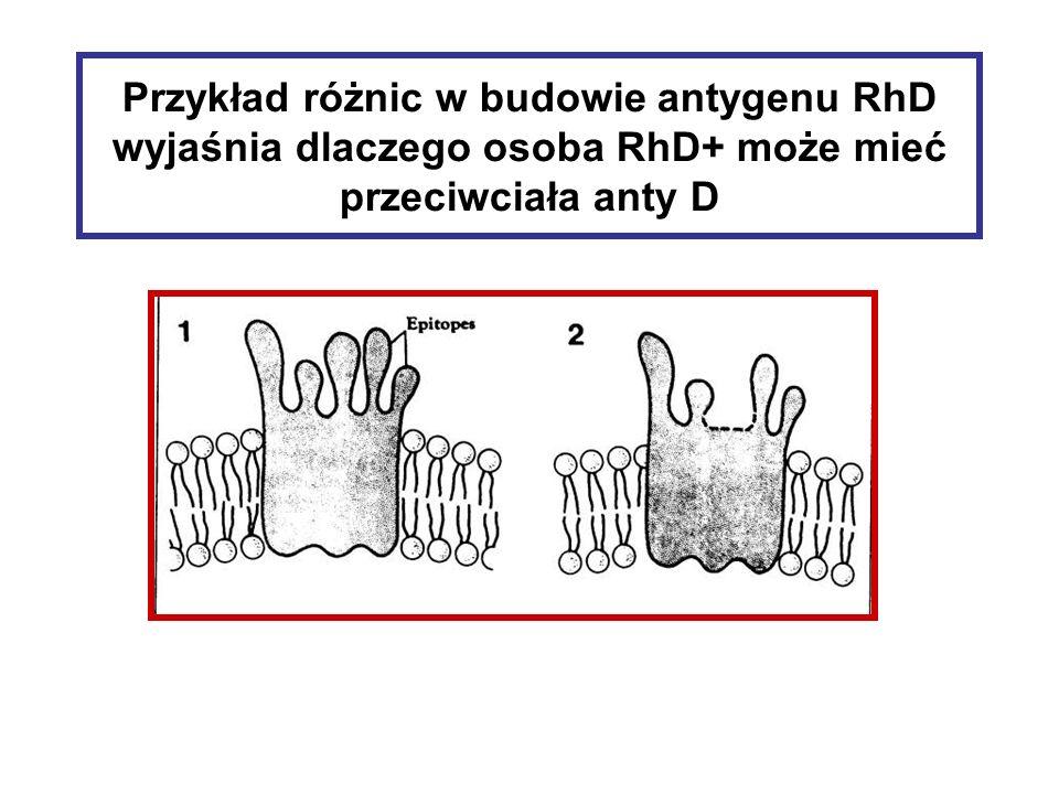 Przykład różnic w budowie antygenu RhD wyjaśnia dlaczego osoba RhD+ może mieć przeciwciała anty D