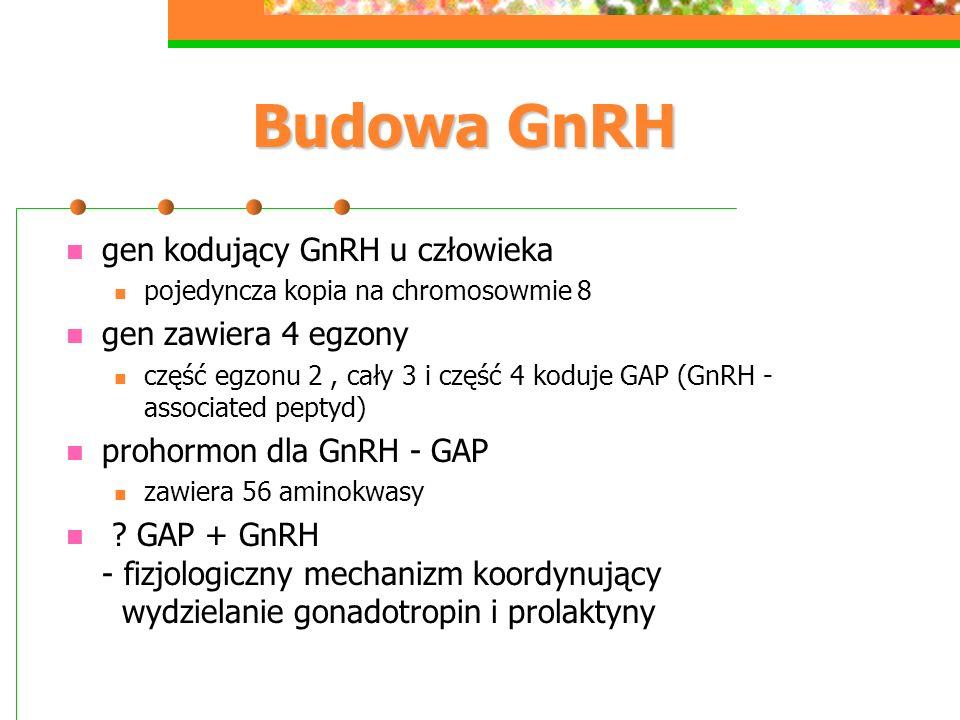 Budowa GnRH gen kodujący GnRH u człowieka pojedyncza kopia na chromosowmie 8 gen zawiera 4 egzony część egzonu 2, cały 3 i część 4 koduje GAP (GnRH -