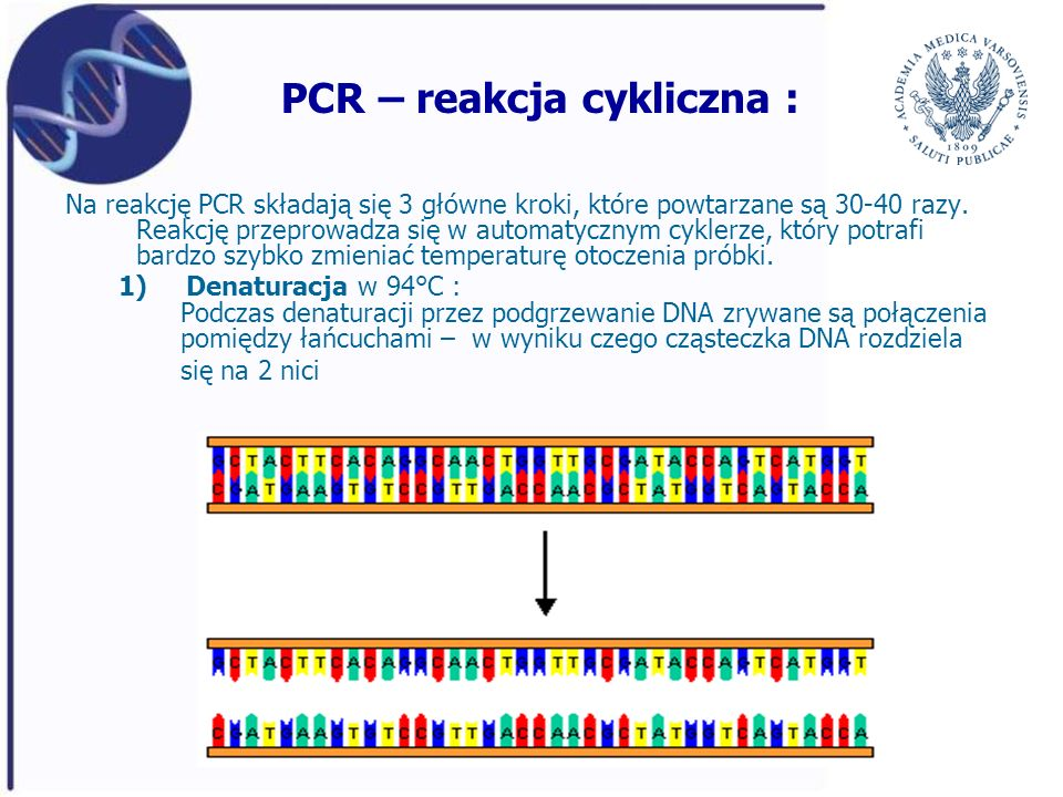 PCR – reakcja cykliczna : Na reakcję PCR składają się 3 główne kroki, które powtarzane są 30-40 razy. Reakcję przeprowadza się w automatycznym cyklerz