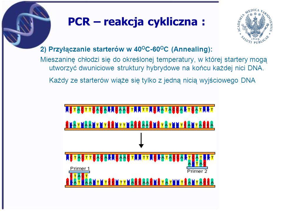 PCR – reakcja cykliczna : 2) Przyłączanie starterów w 40 O C-60 O C (Annealing): Mieszaninę chłodzi się do określonej temperatury, w której startery m