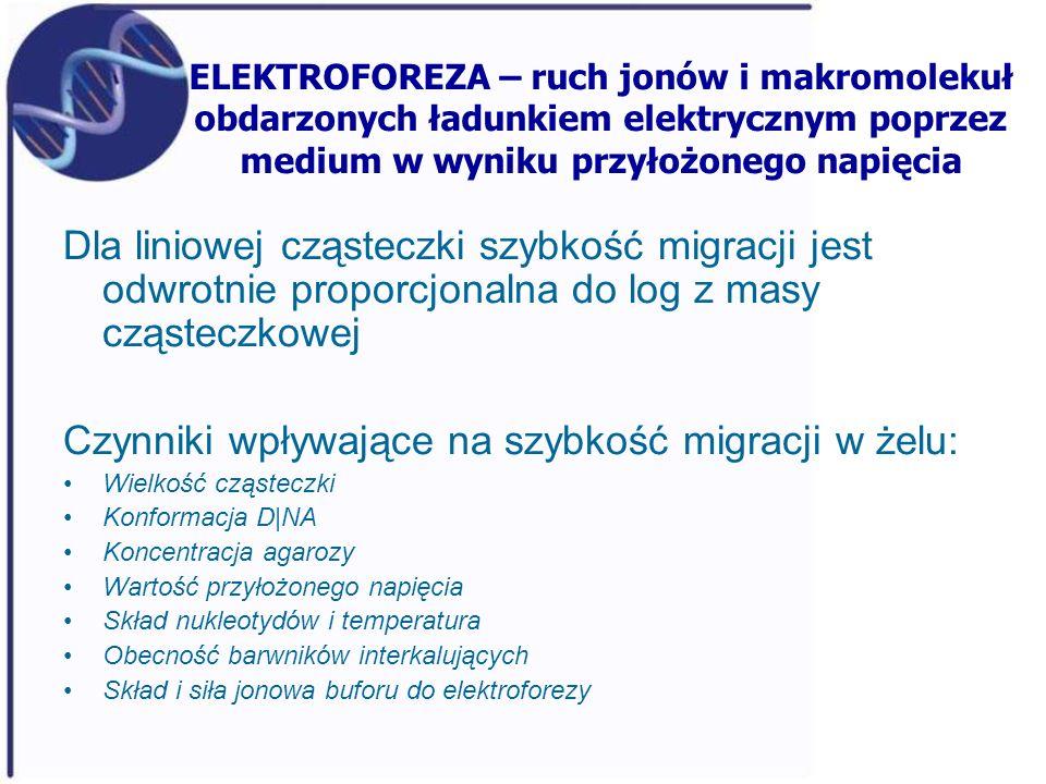 ELEKTROFOREZA – ruch jonów i makromolekuł obdarzonych ładunkiem elektrycznym poprzez medium w wyniku przyłożonego napięcia Dla liniowej cząsteczki szy
