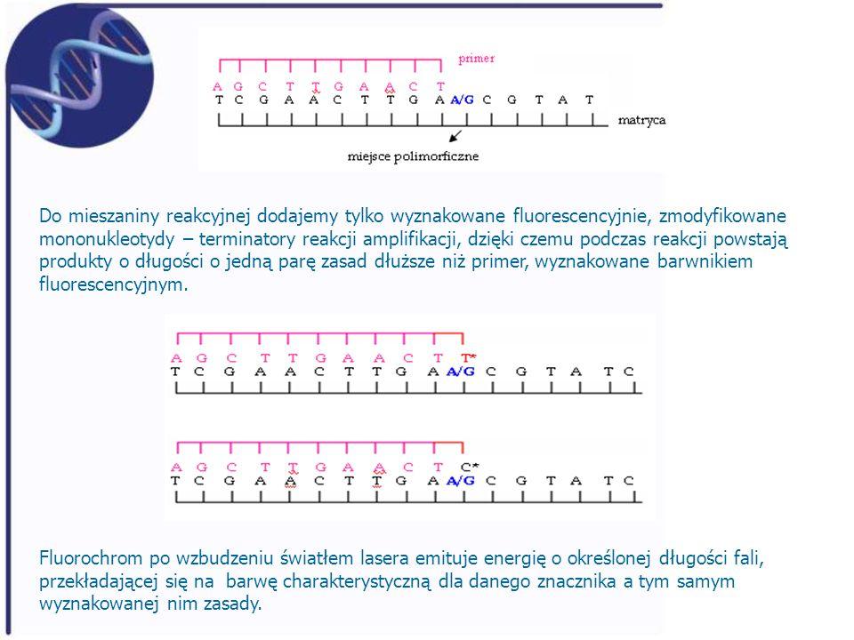 Do mieszaniny reakcyjnej dodajemy tylko wyznakowane fluorescencyjnie, zmodyfikowane mononukleotydy – terminatory reakcji amplifikacji, dzięki czemu po