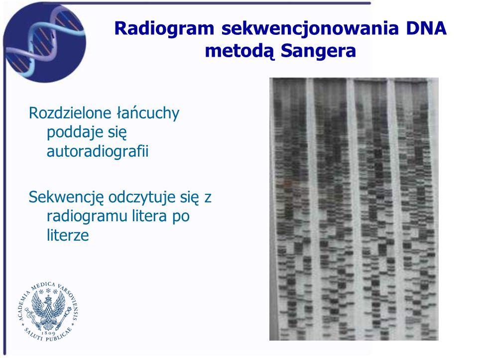 Radiogram sekwencjonowania DNA metodą Sangera Rozdzielone łańcuchy poddaje się autoradiografii Sekwencję odczytuje się z radiogramu litera po literze
