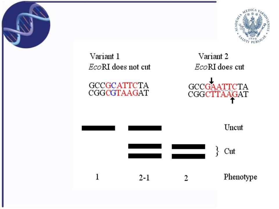 Zalety PCR-RFLP Bardzo dobra metoda bezpośredniej detekcji mutacji punktowych, zwłaszcza SNP Metoda jest prosta, szybka i tańsza niż southern blotting Rezultaty PCR-RFLP są bardzo łatwe do interpretacji