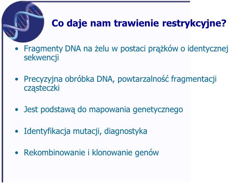 Co daje nam trawienie restrykcyjne? Fragmenty DNA na żelu w postaci prążków o identycznej sekwencji Precyzyjna obróbka DNA, powtarzalność fragmentacji