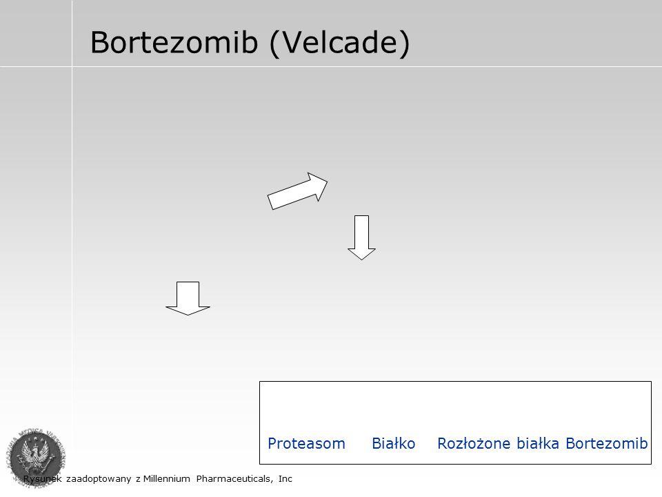 Bortezomib (Velcade) Proteasom Białko Rozłożone białka Bortezomib Rysunek zaadoptowany z Millennium Pharmaceuticals, Inc
