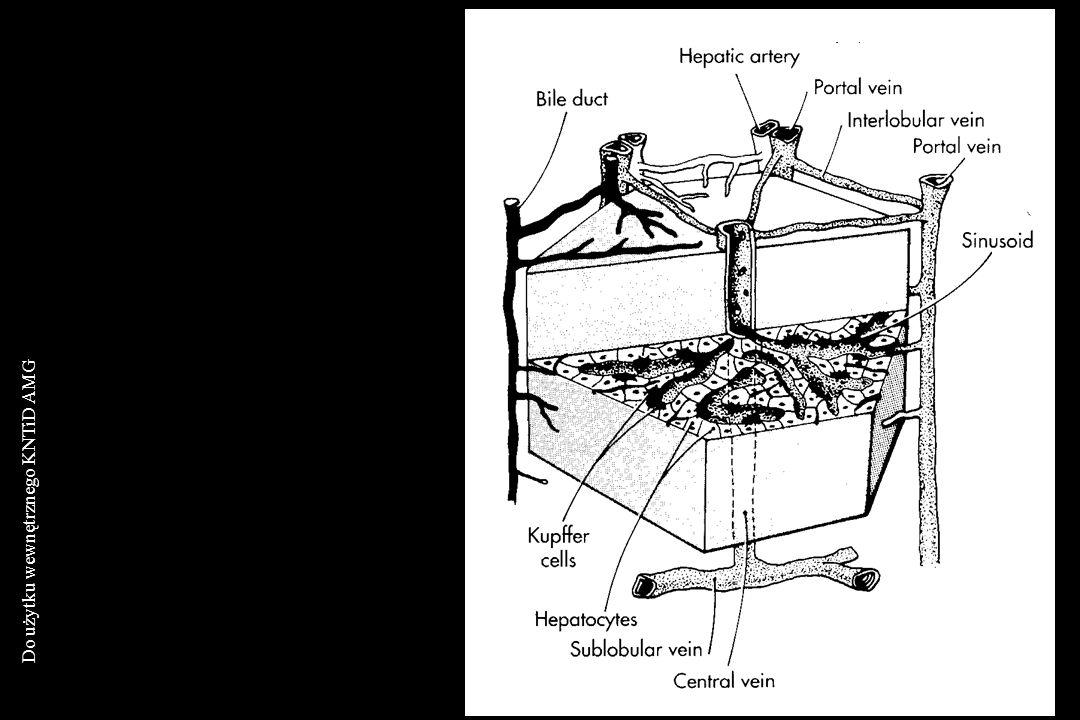 Do użytku wewnętrznego KNTiD AMG BADANIA OBRAZOWE DIAGNOSTYKA RADIOIZOPTOPOWA Scyntygrafia wątroby i tomografia komputerowa emisyjna stwierdzenie ograniczonych zmian wątrobowych; typowy obraz w zespole Budda-Chiariego - zamknięcie żył wątroby Scyntygrafia sekwencyjna wątroby i dróg żółciowych różnicowanie pomiędzy cholestazą wewnątrz- i pozawątrobową; Scyntygrafia perfuzyjna wątroby ocena ukrwienia wątroby i miejscowej chemioterapii przerzutów do wątroby; Scyntygrafia perfuzyjna zbiorników krwi wykonywana znakowanymi erytrocytami (typowy obraz w naczyniakach) CHOROBY WĄTROBY