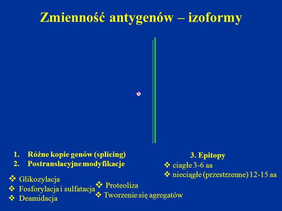 N  Glikozylacja  Fosforylacja i sulfatacja  Deamidacja  Proteoliza  Tworzenie się agregatów Zmienność antygenów – izoformy 1.Różne kopie genów (s