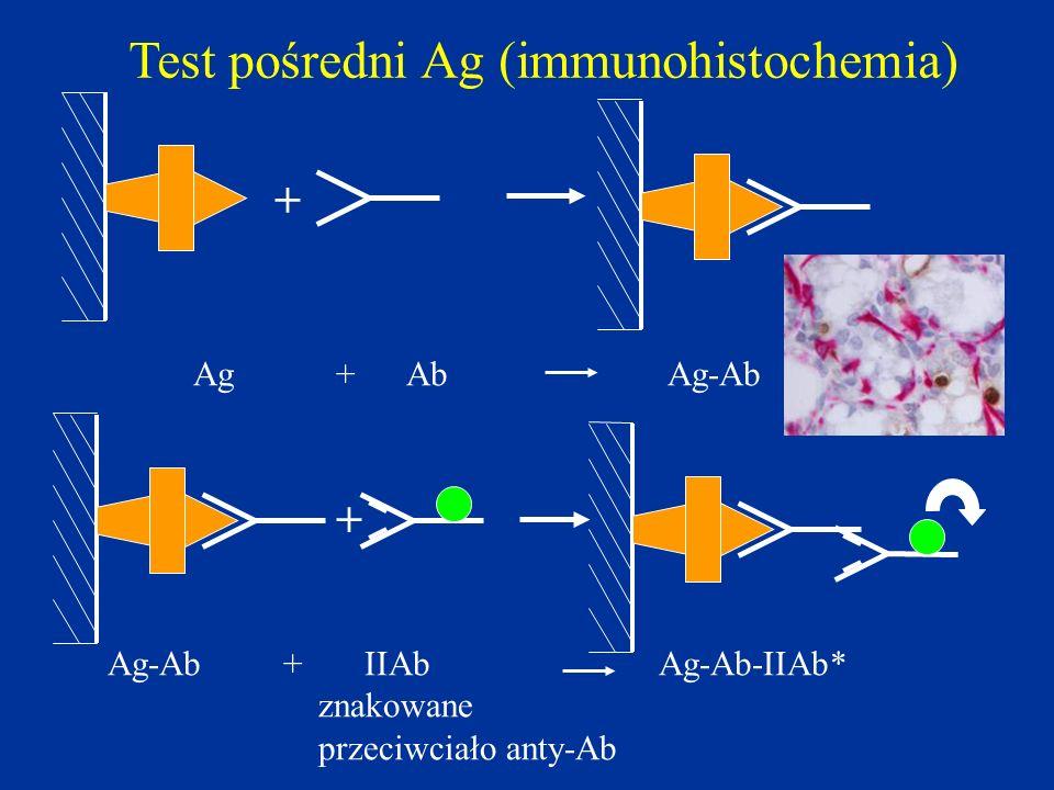 + Ag+ Ab Ag-Ab + Ag-Ab + IIAb Ag-Ab-IIAb* znakowane przeciwciało anty-Ab Test pośredni Ag (immunohistochemia)