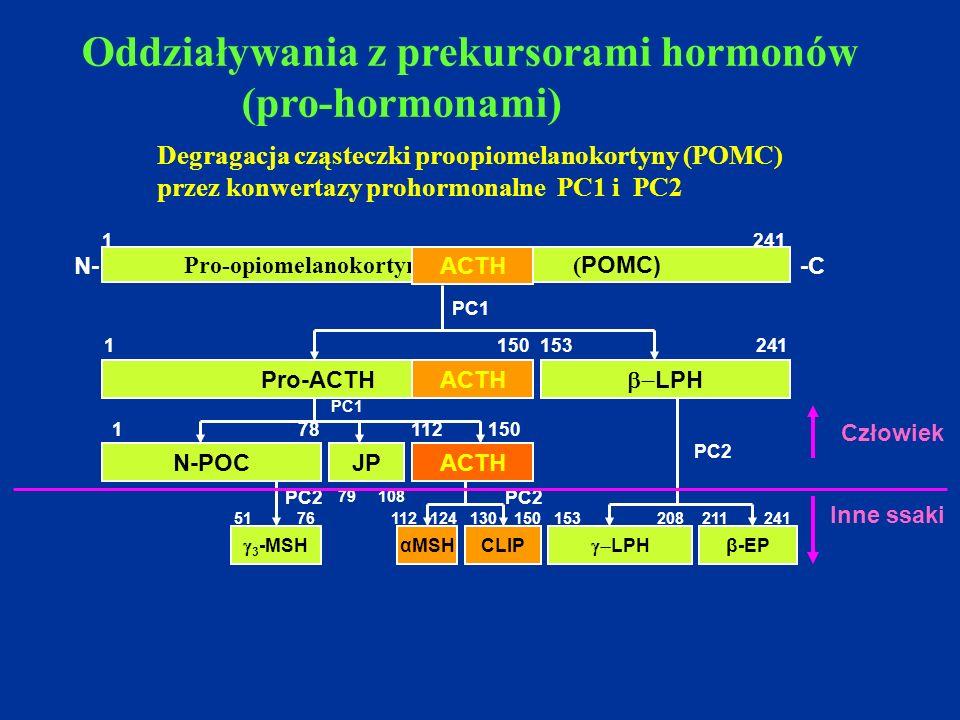 Pro-opiomelanokortyna ( POMC) 1 241 Pro-ACTH  LPH 1 150153 241 N-POCACTHJP  3 -MSH αMSHCLIP  LPH β-EP PC1 PC2 1 78 112 150 79 108 51 76 112 124 1