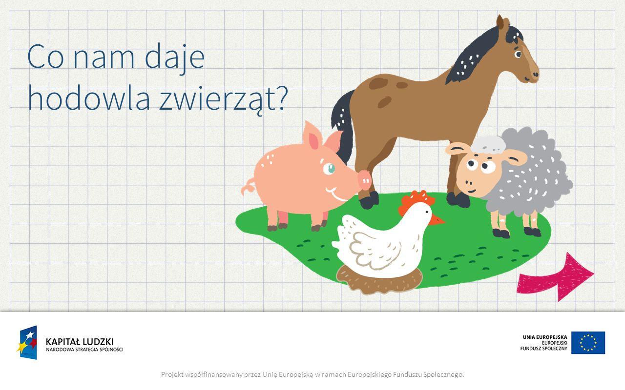 Co nam daje hodowla zwierząt? Projekt współfinansowany przez Unię Europejską w ramach Europejskiego Funduszu Społecznego.