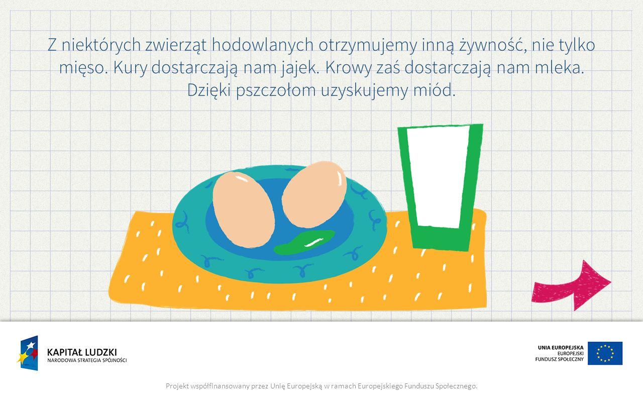Z niektórych zwierząt hodowlanych otrzymujemy inną żywność, nie tylko mięso. Kury dostarczają nam jajek. Krowy zaś dostarczają nam mleka. Dzięki pszcz