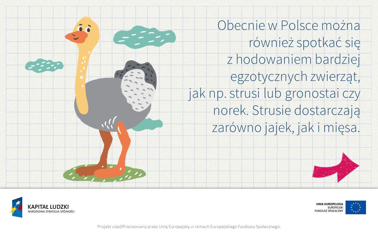 Obecnie w Polsce można również spotkać się z hodowaniem bardziej egzotycznych zwierząt, jak np. strusi lub gronostai czy norek. Strusie dostarczają za