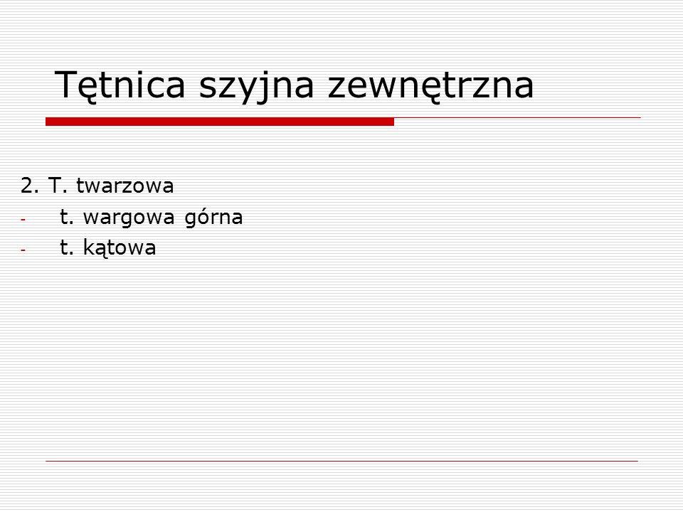 Tętnica szyjna zewnętrzna 2. T. twarzowa - t. wargowa górna - t. kątowa