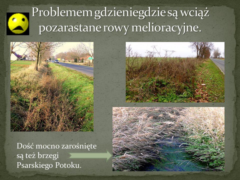Dość mocno zarośnięte są też brzegi Psarskiego Potoku.