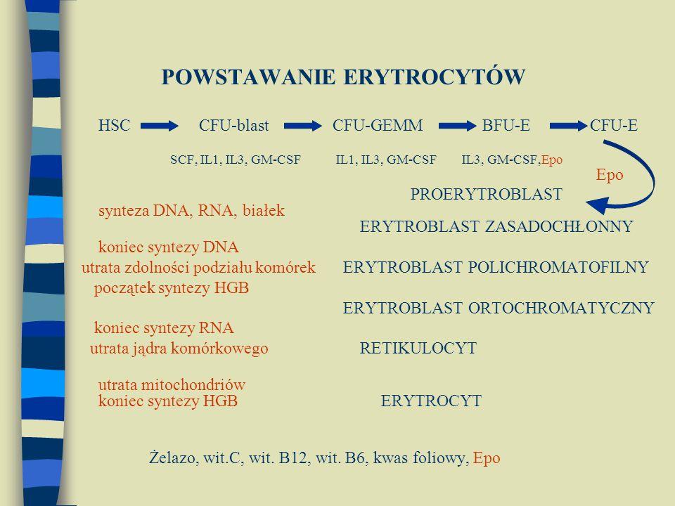POWSTAWANIE ERYTROCYTÓW HSC CFU-blast CFU-GEMM BFU-E CFU-E SCF, IL1, IL3, GM-CSF IL1, IL3, GM-CSF IL3, GM-CSF,Epo Epo PROERYTROBLAST synteza DNA, RNA, białek ERYTROBLAST ZASADOCHŁONNY koniec syntezy DNA utrata zdolności podziału komórekERYTROBLAST POLICHROMATOFILNY początek syntezy HGB ERYTROBLAST ORTOCHROMATYCZNY koniec syntezy RNA utrata jądra komórkowego RETIKULOCYT utrata mitochondriów koniec syntezy HGB ERYTROCYT Żelazo, wit.C, wit.