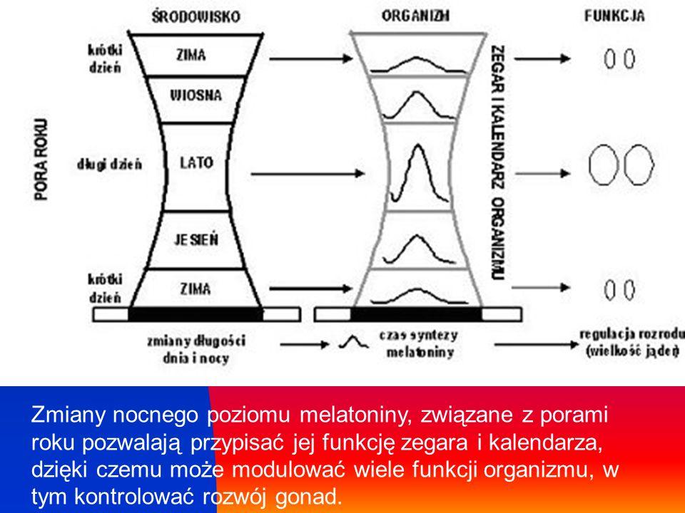 Zmiany nocnego poziomu melatoniny, związane z porami roku pozwalają przypisać jej funkcję zegara i kalendarza, dzięki czemu może modulować wiele funkc