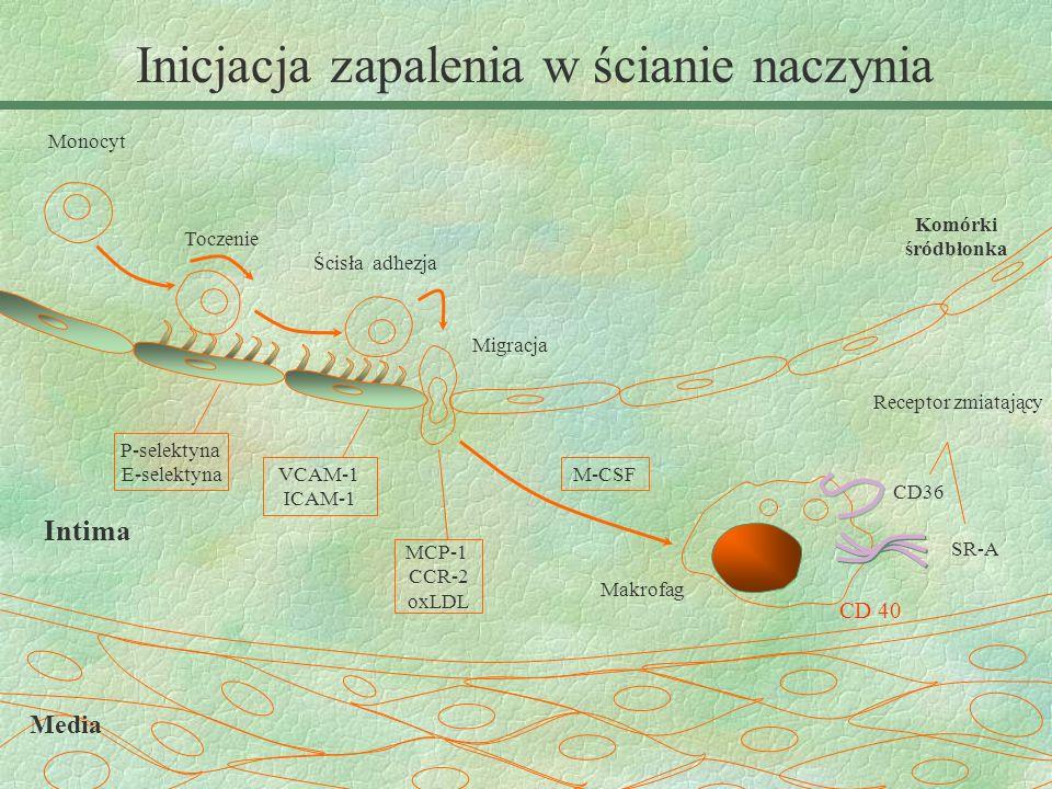 Makrofag Intima Media CD36 SR-A Receptor zmiatający Komórki śródbłonka Monocyt Toczenie Ścisła adhezja Migracja P-selektyna E-selektyna VCAM-1 ICAM-1
