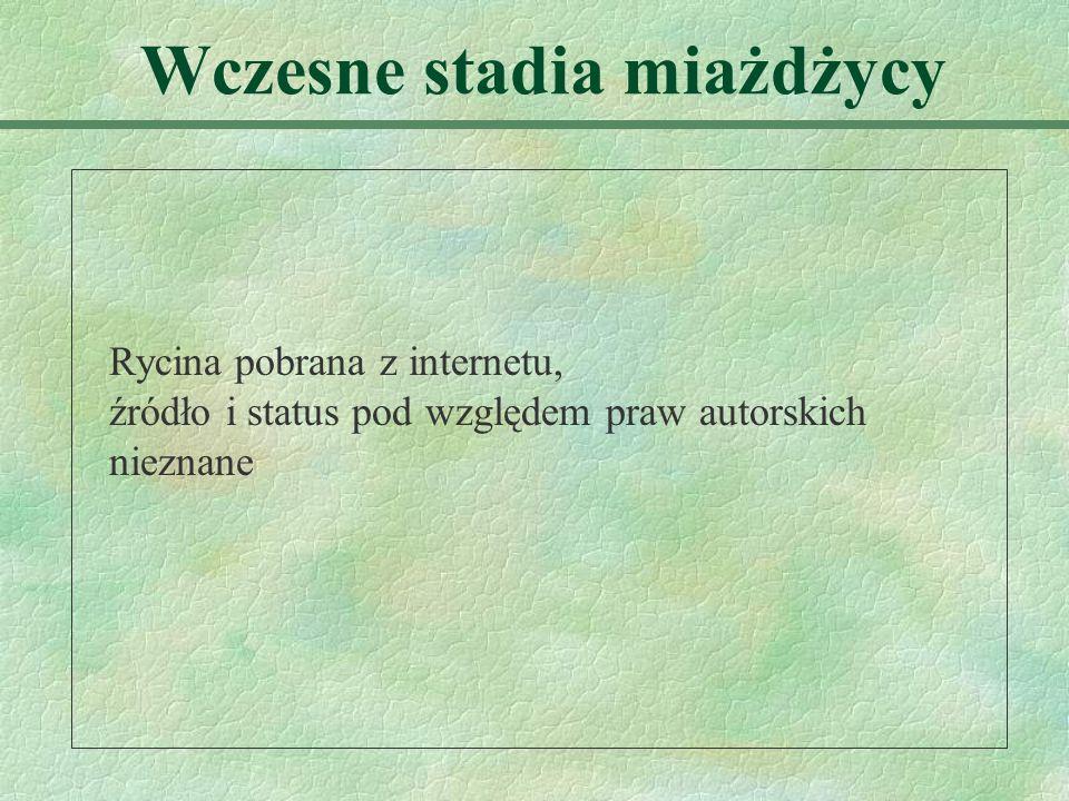 Wczesne stadia miażdżycy Rycina pobrana z internetu, źródło i status pod względem praw autorskich nieznane