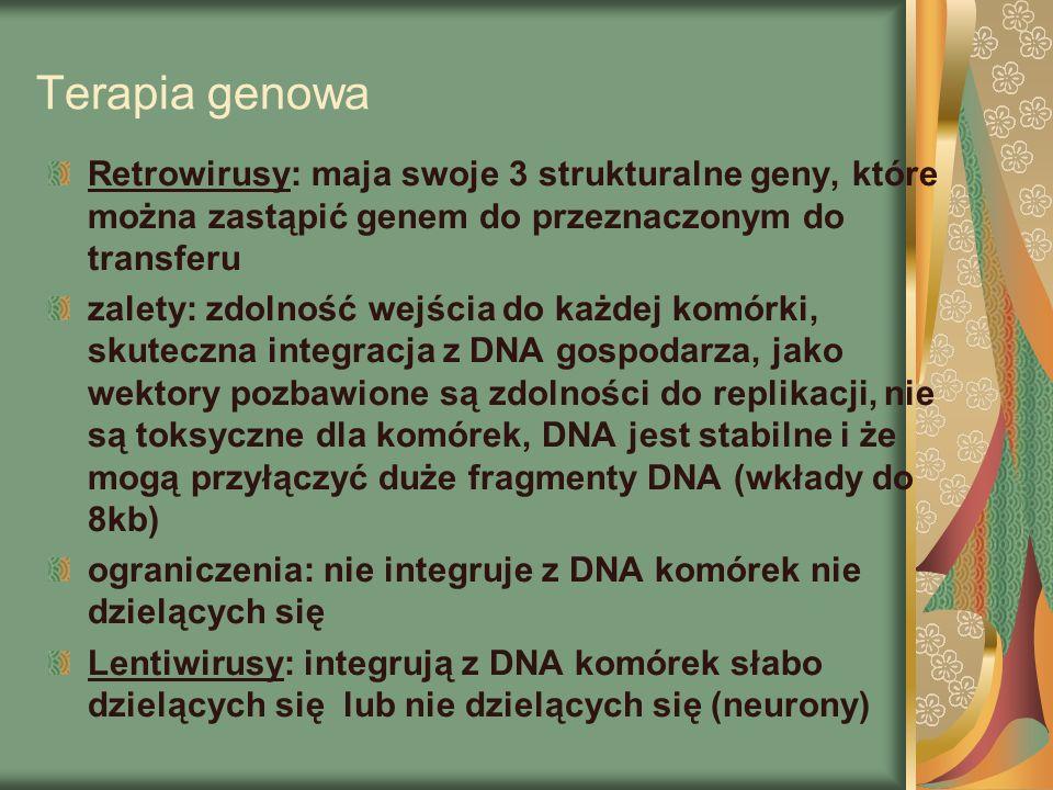Terapia genowa Retrowirusy: maja swoje 3 strukturalne geny, które można zastąpić genem do przeznaczonym do transferu zalety: zdolność wejścia do każdej komórki, skuteczna integracja z DNA gospodarza, jako wektory pozbawione są zdolności do replikacji, nie są toksyczne dla komórek, DNA jest stabilne i że mogą przyłączyć duże fragmenty DNA (wkłady do 8kb) ograniczenia: nie integruje z DNA komórek nie dzielących się Lentiwirusy: integrują z DNA komórek słabo dzielących się lub nie dzielących się (neurony)