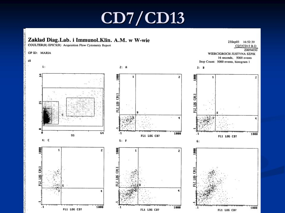 CD7/CD13