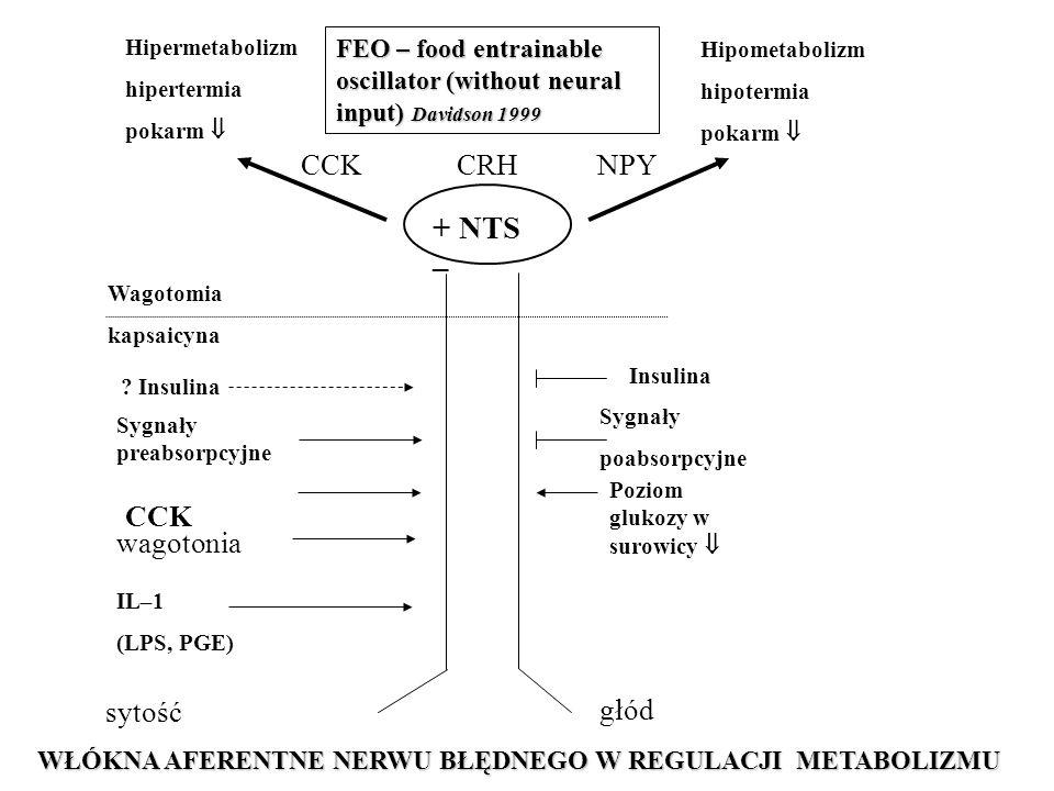Hipermetabolizm hipertermia pokarm  Hipometabolizm hipotermia pokarm  + NTS – CCK CRH NPY głód sytość Wagotomia kapsaicyna Sygnały preabsorpcyjne CCK IL–1 (LPS, PGE) .