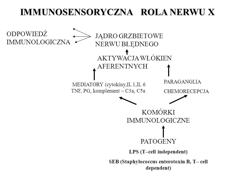 IMMUNOSENSORYCZNA ROLA NERWU X IMMUNOSENSORYCZNA ROLA NERWU X JĄDRO GRZBIETOWE NERWU BŁĘDNEGO ODPOWIEDŹ IMMUNOLOGICZNA AKTYWACJA WŁÓKIEN AFERENTNYCH MEDIATORY (cytokiny,IL 1,IL 6 TNF, PG, komplement – C3a, C5a PARAGANGLIA CHEMORECEPCJA KOMÓRKI IMMUNOLOGICZNE PATOGENY LPS (T–cell independent) SEB (Staphylococcus enterotoxin B, T– cell dependent)