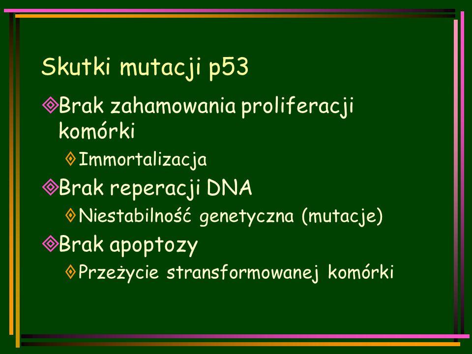 Skutki mutacji p53  Brak zahamowania proliferacji komórki  Immortalizacja  Brak reperacji DNA  Niestabilność genetyczna (mutacje)  Brak apoptozy  Przeżycie stransformowanej komórki