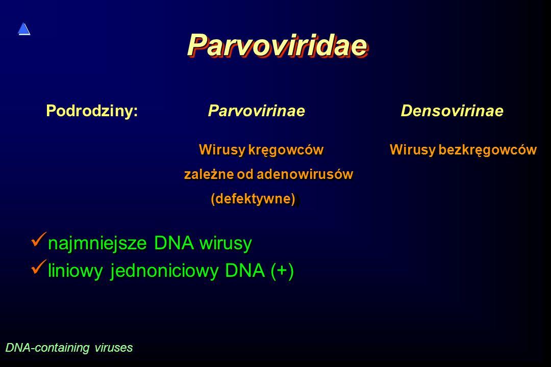 ParvoviridaeParvoviridae najmniejsze DNA wirusy liniowy jednoniciowy DNA (+) najmniejsze DNA wirusy liniowy jednoniciowy DNA (+) DNA-containing viruse