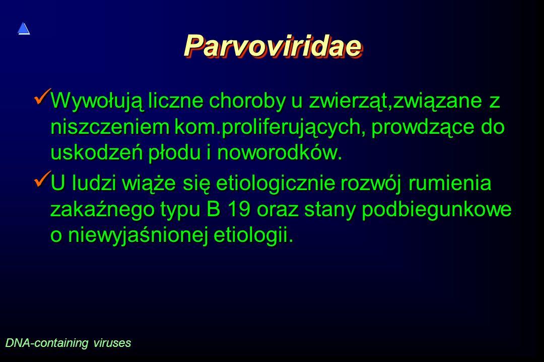ParvoviridaeParvoviridae Wywołują liczne choroby u zwierząt,związane z niszczeniem kom.proliferujących, prowdzące do uskodzeń płodu i noworodków.