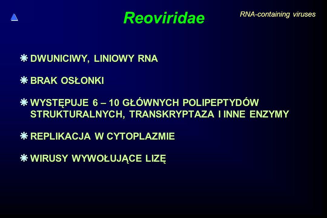 Reoviridae  DWUNICIWY, LINIOWY RNA  BRAK OSŁONKI  WYSTĘPUJE 6 – 10 GŁÓWNYCH POLIPEPTYDÓW STRUKTURALNYCH, TRANSKRYPTAZA I INNE ENZYMY  REPLIKACJA W CYTOPLAZMIE  WIRUSY WYWOŁUJĄCE LIZĘ RNA-containing viruses
