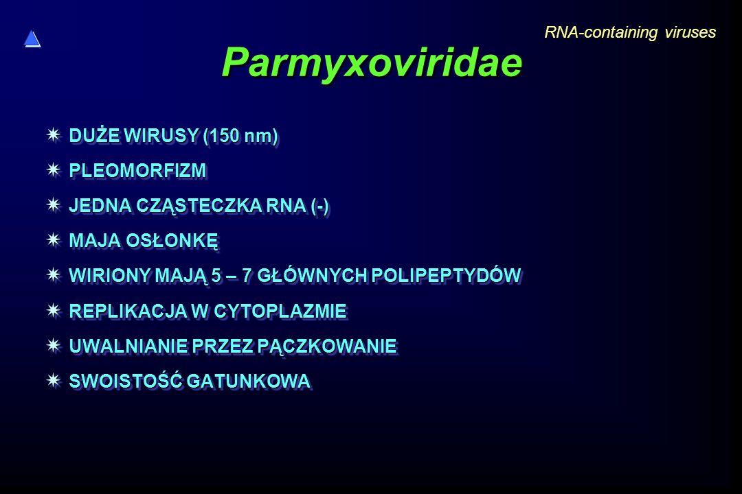 Parmyxoviridae  DUŻE WIRUSY (150 nm)  PLEOMORFIZM  JEDNA CZĄSTECZKA RNA (-)  MAJA OSŁONKĘ  WIRIONY MAJĄ 5 – 7 GŁÓWNYCH POLIPEPTYDÓW  REPLIKACJA W CYTOPLAZMIE  UWALNIANIE PRZEZ PĄCZKOWANIE  SWOISTOŚĆ GATUNKOWA  DUŻE WIRUSY (150 nm)  PLEOMORFIZM  JEDNA CZĄSTECZKA RNA (-)  MAJA OSŁONKĘ  WIRIONY MAJĄ 5 – 7 GŁÓWNYCH POLIPEPTYDÓW  REPLIKACJA W CYTOPLAZMIE  UWALNIANIE PRZEZ PĄCZKOWANIE  SWOISTOŚĆ GATUNKOWA RNA-containing viruses