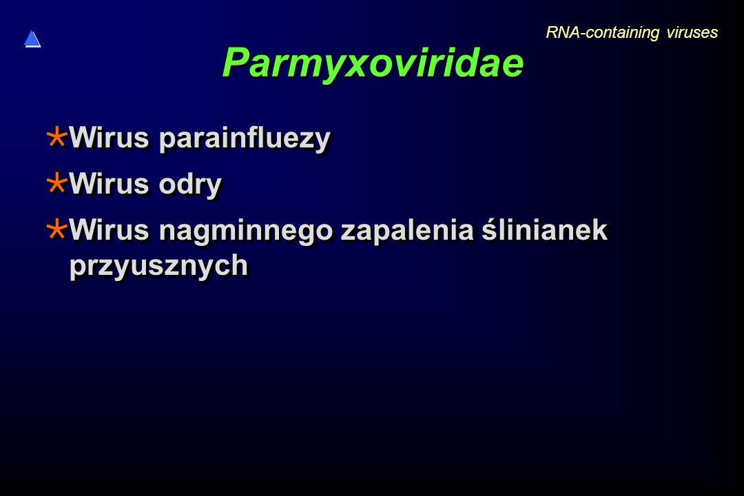 Parmyxoviridae  Wirus parainfluezy  Wirus odry  Wirus nagminnego zapalenia ślinianek przyusznych  Wirus parainfluezy  Wirus odry  Wirus nagminnego zapalenia ślinianek przyusznych RNA-containing viruses