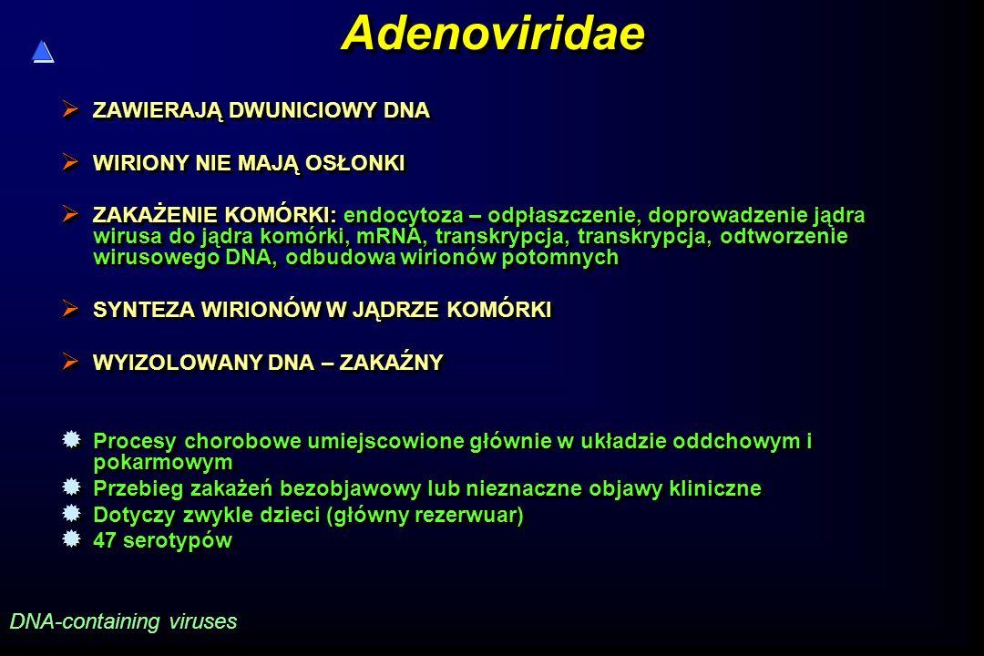 AdenoviridaeAdenoviridae  ZAWIERAJĄ DWUNICIOWY DNA  WIRIONY NIE MAJĄ OSŁONKI  ZAKAŻENIE KOMÓRKI: endocytoza – odpłaszczenie, doprowadzenie jądra wirusa do jądra komórki, mRNA, transkrypcja, transkrypcja, odtworzenie wirusowego DNA, odbudowa wirionów potomnych  SYNTEZA WIRIONÓW W JĄDRZE KOMÓRKI  WYIZOLOWANY DNA – ZAKAŹNY  Procesy chorobowe umiejscowione głównie w układzie oddchowym i pokarmowym  Przebieg zakażeń bezobjawowy lub nieznaczne objawy kliniczne  Dotyczy zwykle dzieci (główny rezerwuar)  47 serotypów  ZAWIERAJĄ DWUNICIOWY DNA  WIRIONY NIE MAJĄ OSŁONKI  ZAKAŻENIE KOMÓRKI: endocytoza – odpłaszczenie, doprowadzenie jądra wirusa do jądra komórki, mRNA, transkrypcja, transkrypcja, odtworzenie wirusowego DNA, odbudowa wirionów potomnych  SYNTEZA WIRIONÓW W JĄDRZE KOMÓRKI  WYIZOLOWANY DNA – ZAKAŹNY  Procesy chorobowe umiejscowione głównie w układzie oddchowym i pokarmowym  Przebieg zakażeń bezobjawowy lub nieznaczne objawy kliniczne  Dotyczy zwykle dzieci (główny rezerwuar)  47 serotypów DNA-containing viruses