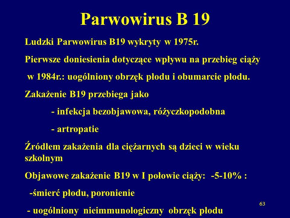 63 Parwowirus B 19 Ludzki Parwowirus B19 wykryty w 1975r.