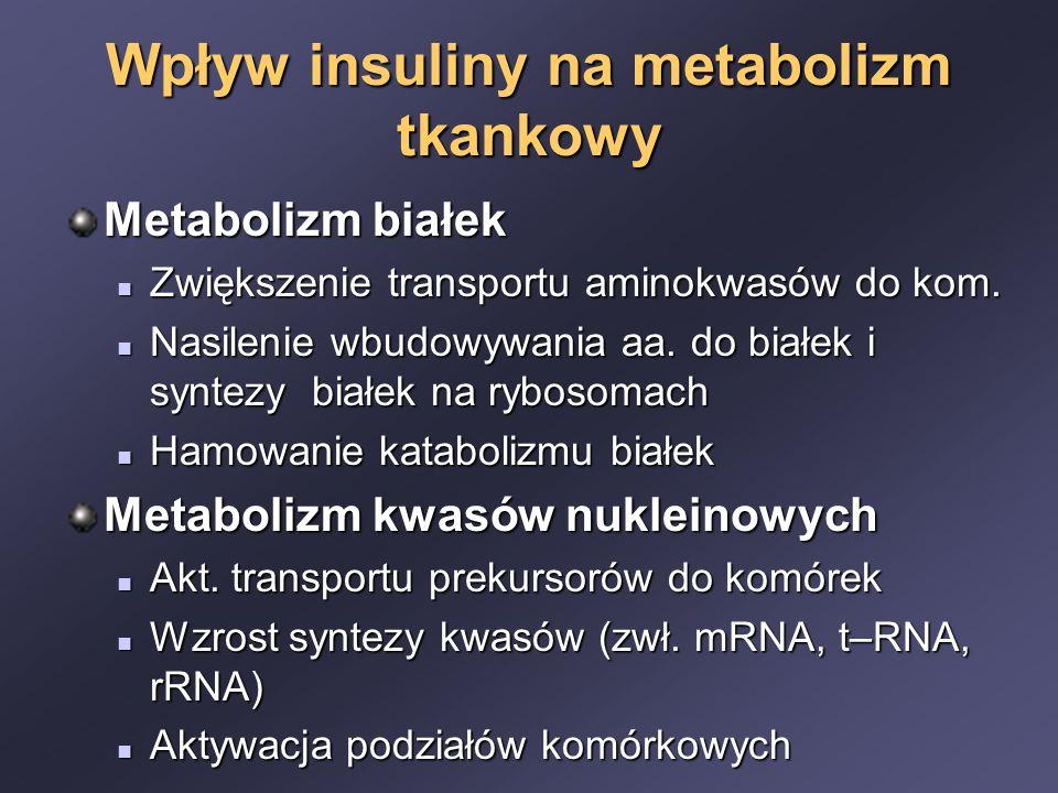Wpływ insuliny na metabolizm tkankowy Metabolizm białek Zwiększenie transportu aminokwasów do kom. Zwiększenie transportu aminokwasów do kom. Nasileni