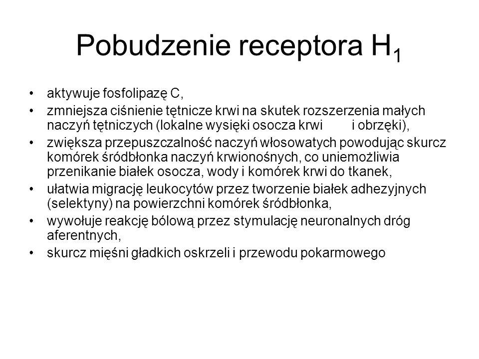 Pobudzenie receptora H 1 aktywuje fosfolipazę C, zmniejsza ciśnienie tętnicze krwi na skutek rozszerzenia małych naczyń tętniczych (lokalne wysięki os