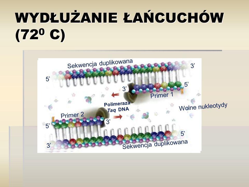 WYDŁUŻANIE ŁAŃCUCHÓW (72 0 C) Sekwencja duplikowana Primer 1 Primer 2 5' 3' 5' 3' 5' 3' Polimeraza Taq DNA Wolne nukleotydy